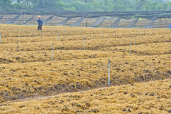 Soil preparation land for vegetable cultivation Royalty Free Stock Photo