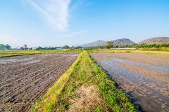 Soil preparation for planting new season of rice farm Stock Image