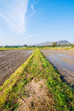 Soil preparation for planting new season of rice farm. Stock Image