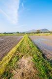 Soil preparation for planting new season of rice farm. Stock Image