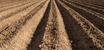 Soil preparation for sowing vegetable in field Royalty Free Stock Photo