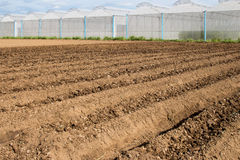 Soil preparation for sowing vegetable in field Stock Images