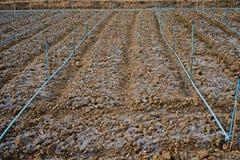 Soil preparation for vegetable Stock Photos