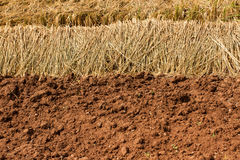 Soil prepared for agriculture Stock Image