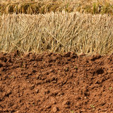Soil prepared for agriculture Stock Photo