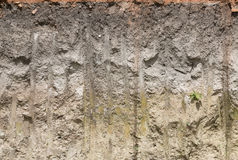 Soil profile in cross section. Royalty Free Stock Photography