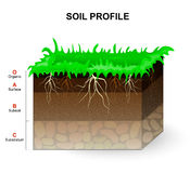 Soil Profile Stock Photo