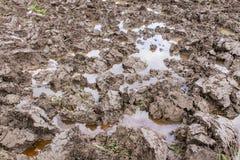 Soil in rice field. Asia Stock Image