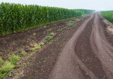 Soil road along an arable land. Soil road between fields of corn (on the left) and some green crop on an early misty morning Royalty Free Stock Photos