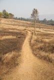 Soil road Stock Image