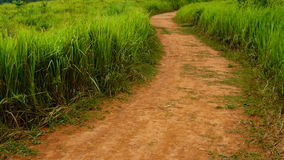 Soil road between grass field Royalty Free Stock Photography