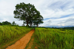 Soil road between grass field with sky Stock Photo