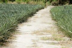 Soil road. stock image