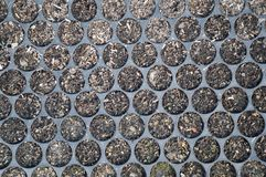 Soil in seedling trays Stock Photography