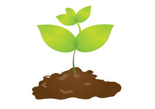 Soil and seedlings Stock Photography