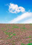 Soil and sky. Uncultivated field under a blue sky Stock Photography