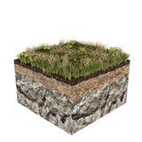 Soil slice Stock Image