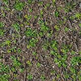 Soil with the Sprouted Grass Texture Seamless. Royalty Free Stock Photos