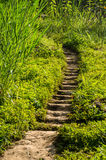 Soil steps. Stair made from soil with messy grass Royalty Free Stock Photo