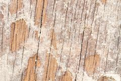 Soil from termite eaten wood wall. Old until disintegrated stock photos