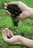 Soil test. Hands with soil on green background. Other versions available in my portfolio Royalty Free Stock Images