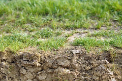Soil texture below grass Royalty Free Stock Photos