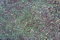 Soil texture with bush and leaves Stock Photos