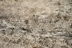 Soil Texture Royalty Free Stock Images