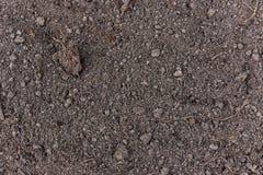 Soil Texture. Detail of dark soil texture background Stock Photography