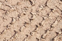 Soil texture on the ground Royalty Free Stock Photo