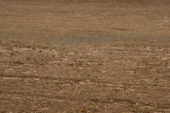 Soil texture layers for natural Royalty Free Stock Photography