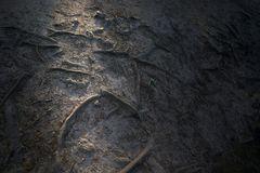 Soil texture with ray of light stock images
