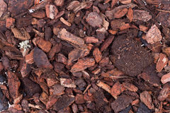 Soil to plants Royalty Free Stock Photo