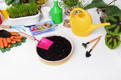 Soil for transplanting flowers. Care of domestic plants Royalty Free Stock Photo