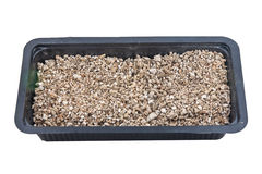 Soil in tray prepare for grow whea Royalty Free Stock Image