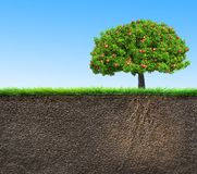 Soil with tree and roots royalty free illustration