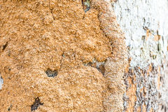 The Soil On A Trunk Royalty Free Stock Photo