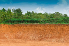 Soil under in cassava farm Stock Photography
