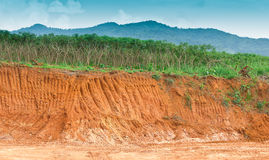 Soil under in cassava farm. Stock Image