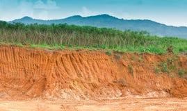 Soil under in cassava farm. Stock Image