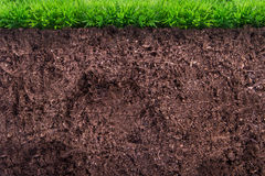 Soil under Grass Royalty Free Stock Image