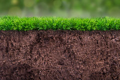 Soil under Grass Stock Photo