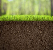 Soil Under Grass In Forest Stock Photos