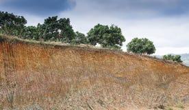 Soil under in longan farm Royalty Free Stock Photo
