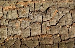 Soil, Wood, Tree, Wall Stock Images