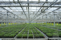 Soilless greenhouse. The indoor view of soilless greenhouse royalty free stock image