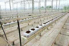 Soilless greenhouse. The indoor view of soilless greenhouse of Lugang Agriculture Model District in Jiangsu, China stock photo