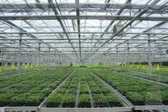 soilless växthus Royaltyfri Bild