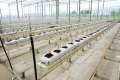 Soilless växthus arkivfoto