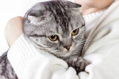 Soin d'animaux familiers Jeune femme jugeant le chat à la maison Chat mignon chez des mains de la femme Amour animal Amant de cha Photos libres de droits